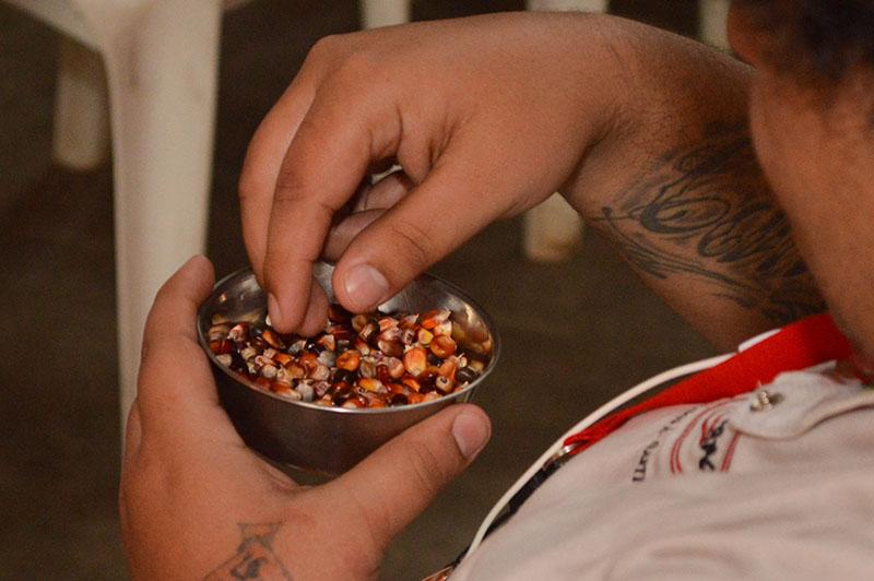 Los granos de maíz morado producidos por parcialidades indígenas que están siendo rescatadas.